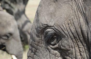 Southern Tanzania Safari,