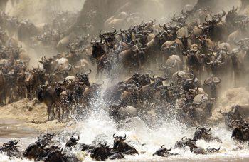 Migration Lomo Tanzania Safari